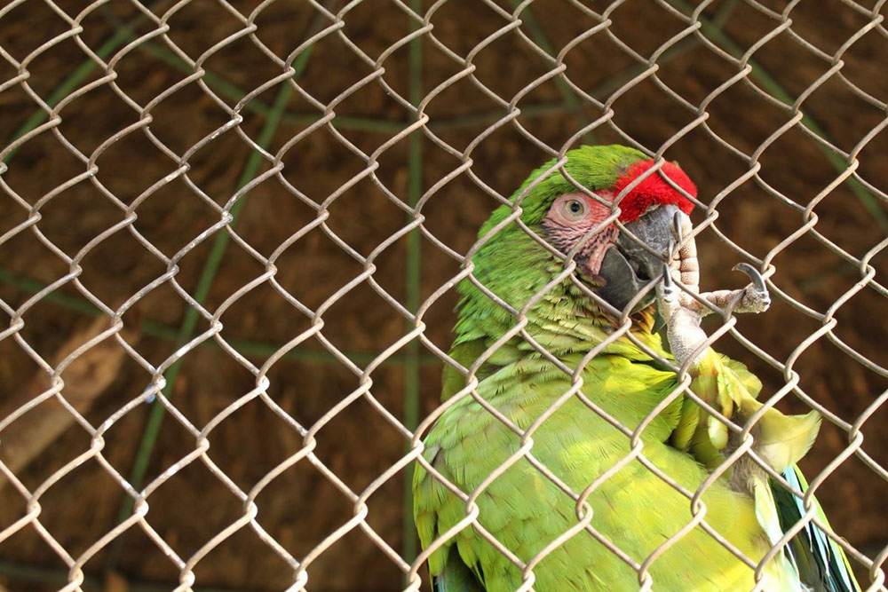 chainlink fence bird aviary wire mesh