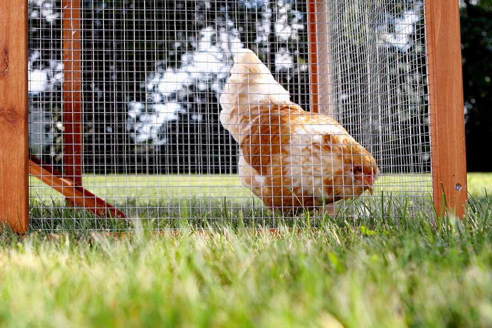 stainless steel mesh hardware cloth for chicken coop